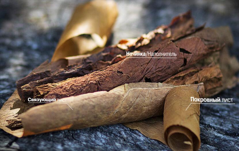 Структура сигары